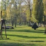 Spiraea, Forsythia si ienupar in Parcul Teius