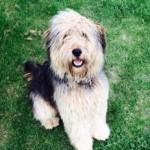 Găsit câine rătăcit, în zona Caransebeşul Nou.