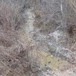 25.000 de caransebeseni, la mana a 11 oameni din Dalci. Primaria da si bani pentru a limpezi apa gugulanilor