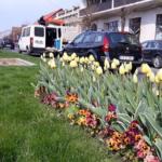 La Caransebeş a venit primăvara