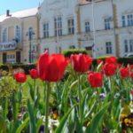 Zeci de mii de flori vor colora Caransebeşul în luna mai