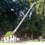 """Îngrijirea """"bătrânilor"""" din parcul General Dragalina continuă"""