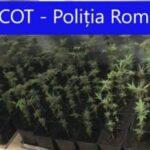 Opt percheziții în Caransebeș, la persoane bănuite de trafic de droguri