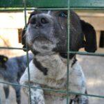 Bani în bugetul Caransebeșului pentru amenajarea unui adăpost pentru câinii maidanezi